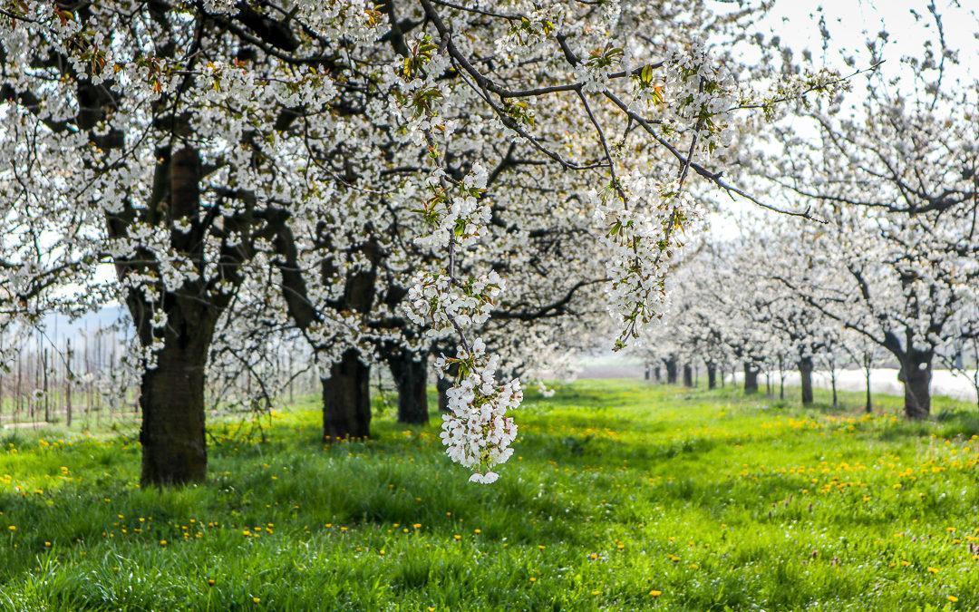 Jahreszeiten in Bildern